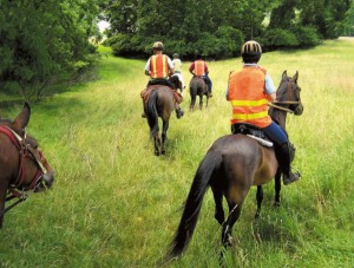 Southeastern Pennsylvania Search and Rescue volunteers head out on a training mission. Their horses are acutely aware of their environment and provide important clues that can lead to the recovery of a lost person. | Photo ? Claudia Lachance