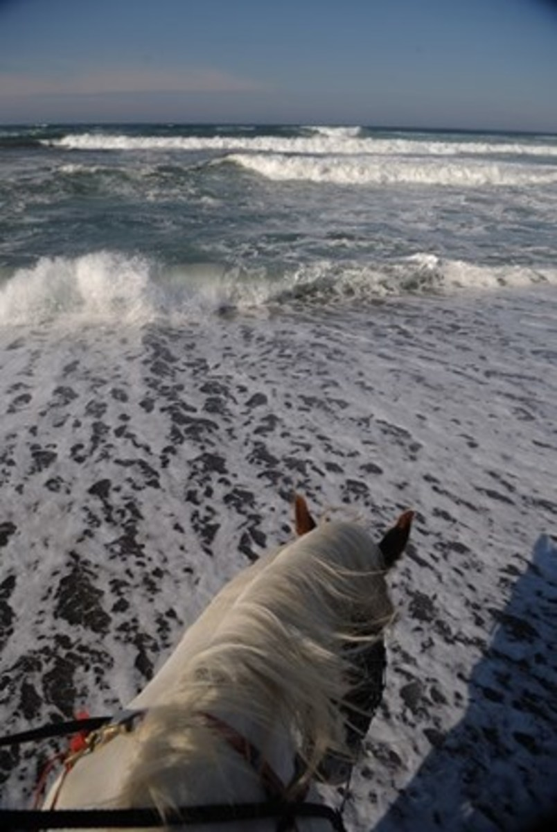 Credit: CLIX Realize that a wave can easily knock your horse off his feet, particularly if it hits him broadside. If you can't get out of the way, turn him so his rump faces the water.