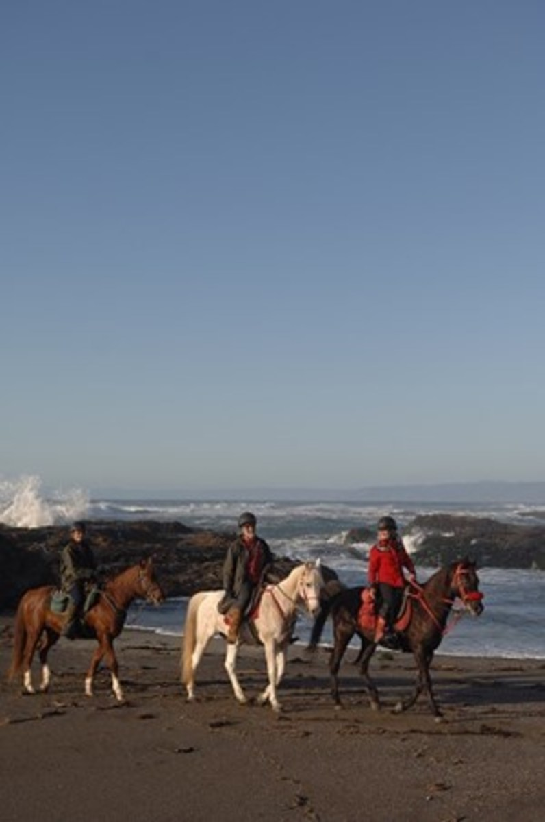 For your first ride, find a riding buddy on an experienced horse that's comfortable on the beach.