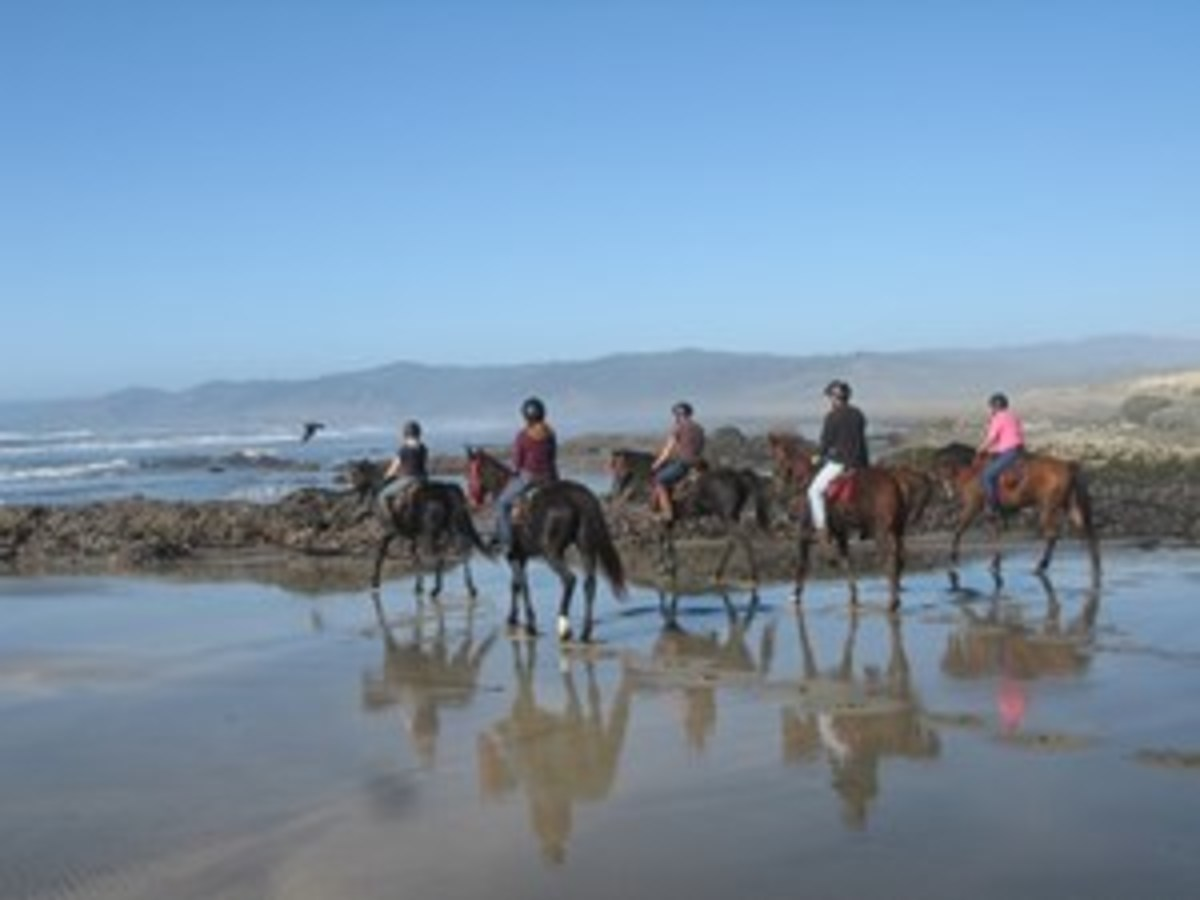 Credit: Lari Shea Plan your first visit to coincide with a receding tide and when the water is relatively calm. High, crashing waves won't inspire calm in a horse that has never seen the ocean!