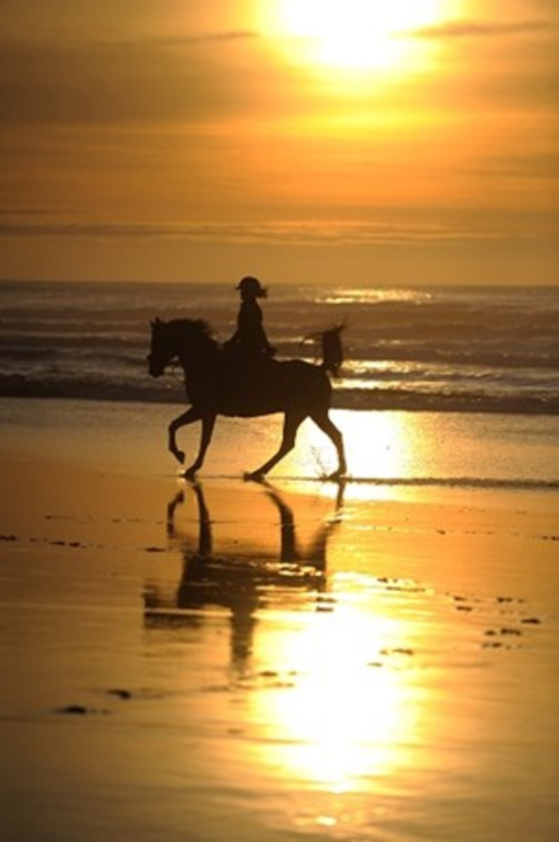 Credit: CLIX There's nothing like a moment suspended in time of horse and rider cantering in the surf at sunset to create a stunning image.