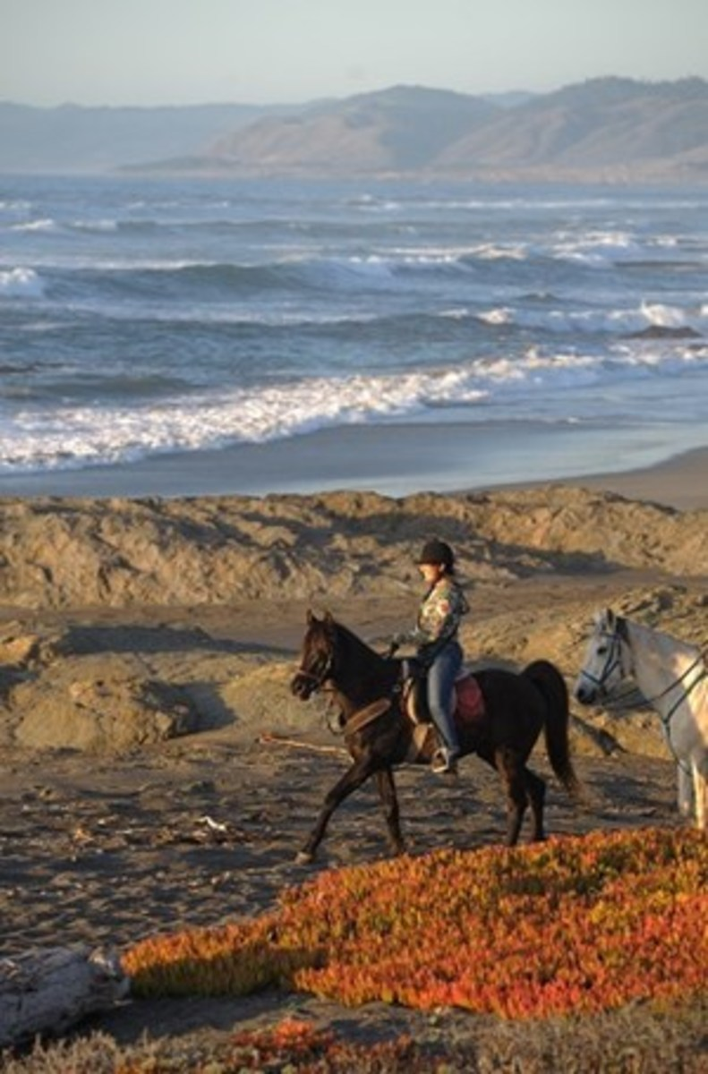 Credit: CLIX Be aware that riding in beach sand can be very tiring to your horse, because their muscles literally have to pull each leg out of the sand with every stride.