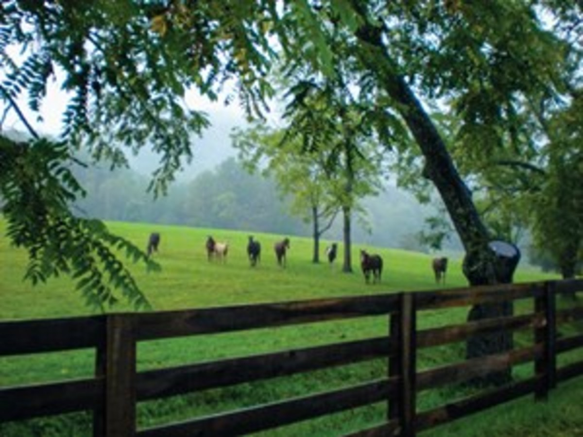 The Settlement at Thomas Divide in Bryson City, Tennessee, has everything you might look for in a mountain community. Plus, you'll enjoy direct access to more than 500 miles of trails in Great Smoky Mountains National Park. Day riders are welcome.