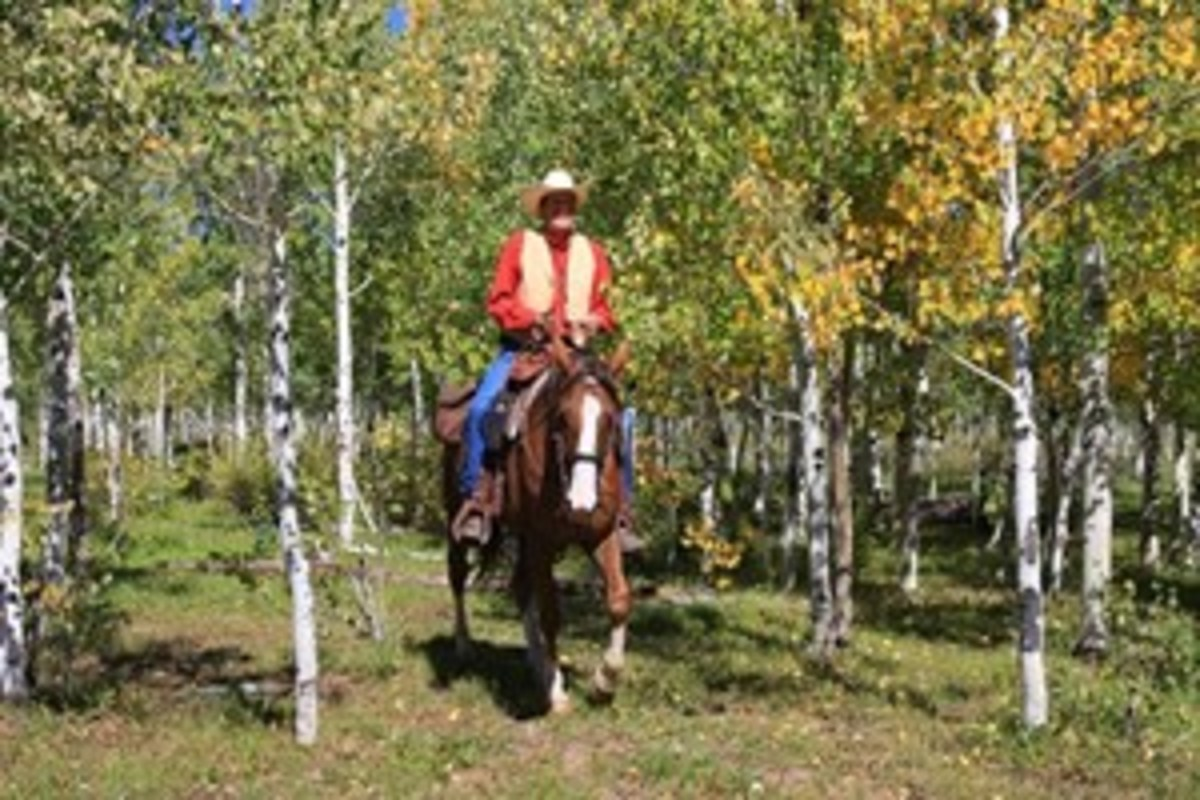Credit: Kent & Charlene Krone Try to avoid riding in areas that are popular hunting spots. If you do ride where hunting is allowed, wear a bright-orange vest.