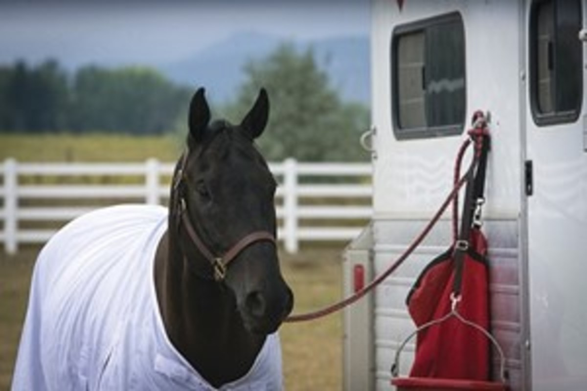 Credit: Heidi Melocco Spring is a busy time for trail riding, horse shows, and other events. Colorado State University veterinarians remind riders that it's important if traveling to take steps that will help prevent the spread of equine infectious disease.