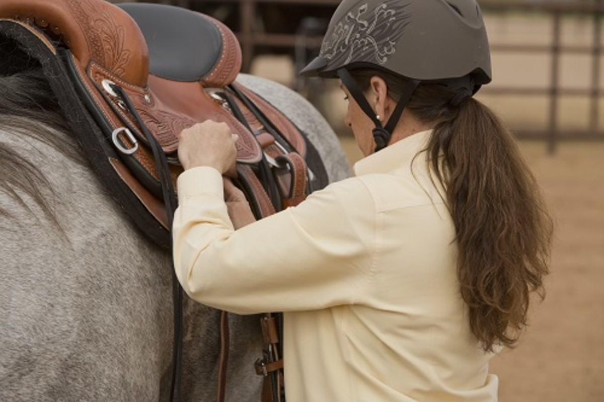 You can tell a lot about a horse's behavior, temperament, and training even before he's saddled up. Pay attention to how the horse reacts to being groomed, saddled, and led.