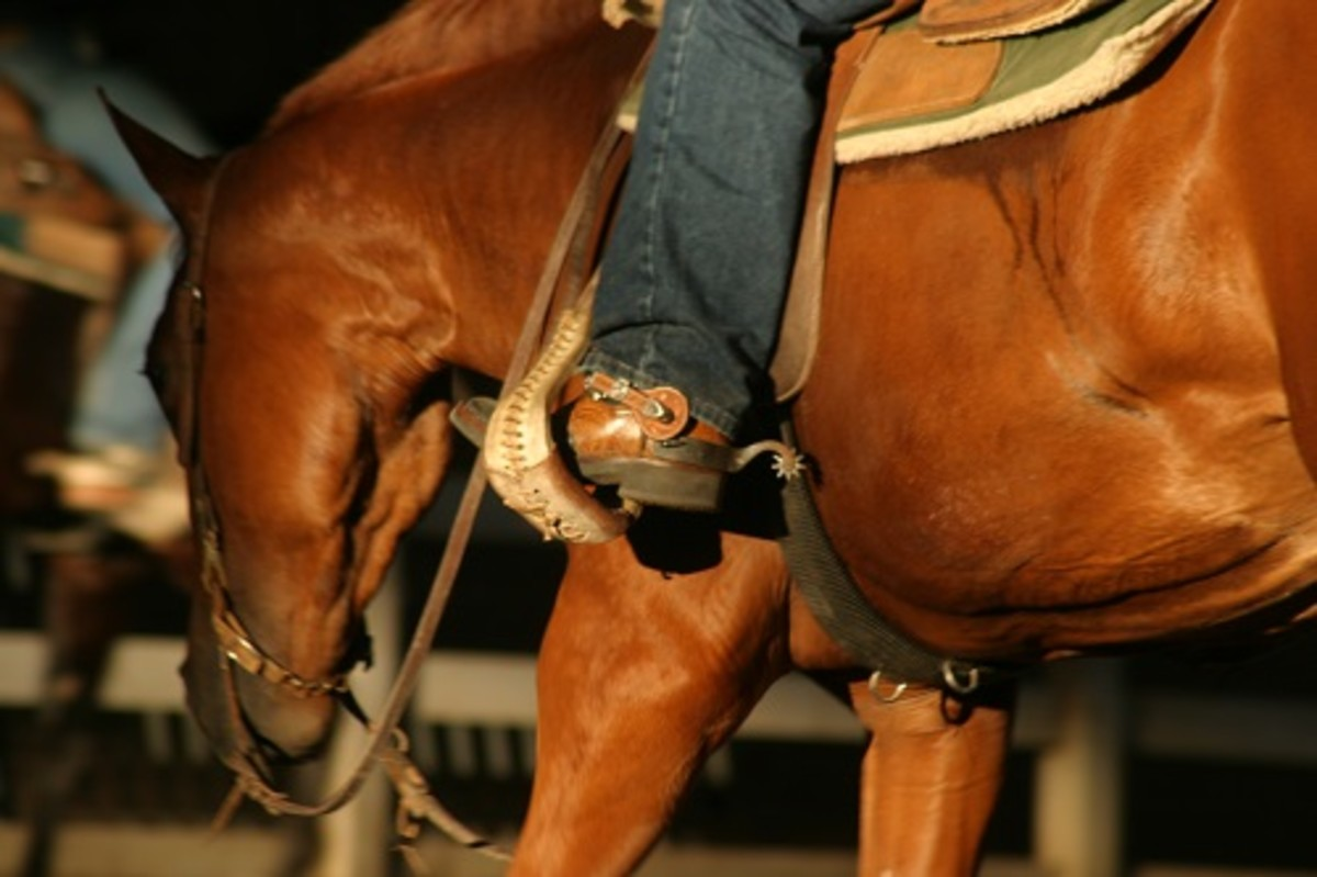 Ask how the horse has been trained and how many days of professional training he's had. A well-trained horse is typically less costly in the long run than what you'll likely pay in training fees.