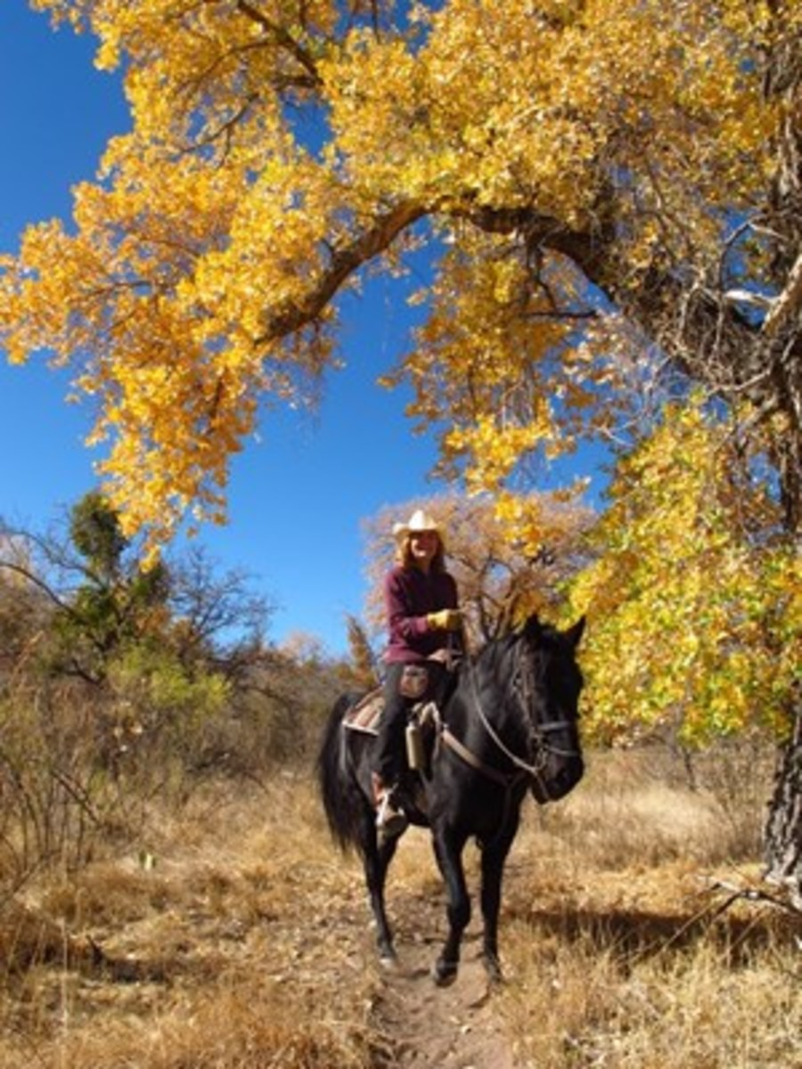 Credit: Kent & Charlene Krone Here's the information you need to plan your trip, whether you wish to ride your own horse or leave him at home and enjoy a riding vacation.