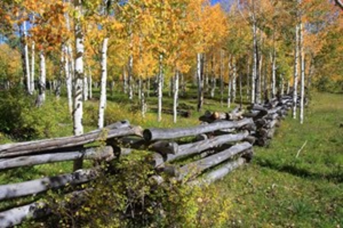 Credit: Kent & Charlene Krone For the best experience riding in fall color, do your homework. Leaves turn color at different times, depending on the latitude and elevation.