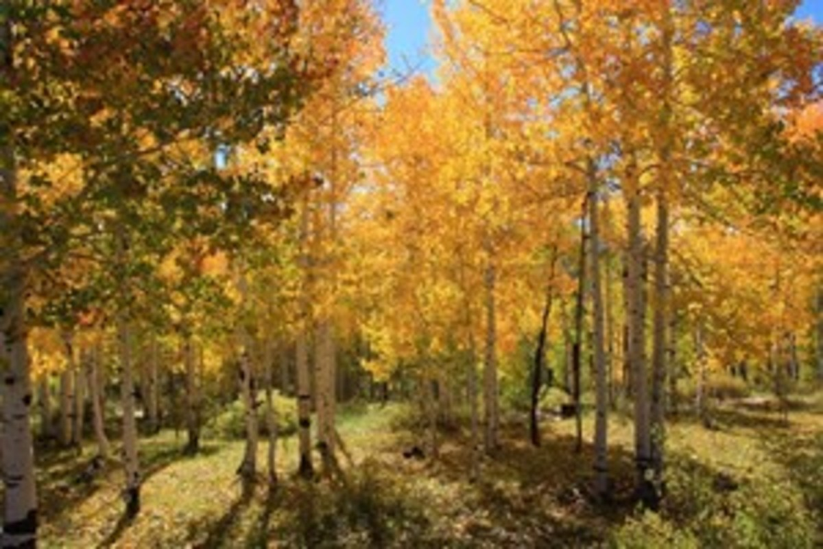 Credit: Kent & Charlene Krone You can choose to leaf-peep on a day or overnight ride close to home, or you can plan a longer road trip.
