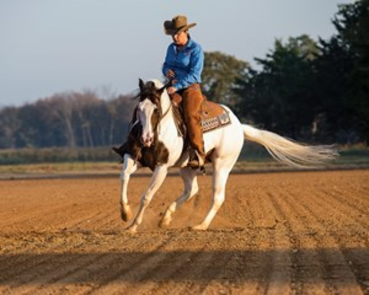 The American Paint Horse Association's new ranch horse pleasure class might tempt you to test your trail horse's skills in a competitive, yet low-key setting.