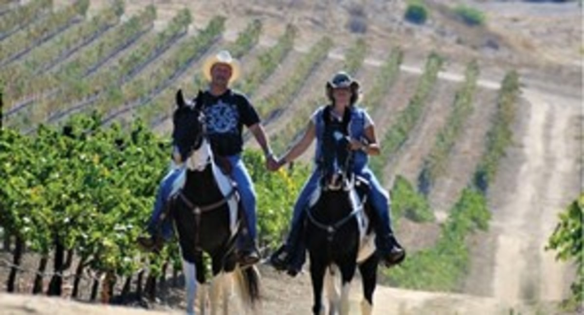 Bring your own horse, and Gaits in the Grapes will host a customized guided day ride through Temecula Wine Country, so you can easily navigate the area's complex trail system.