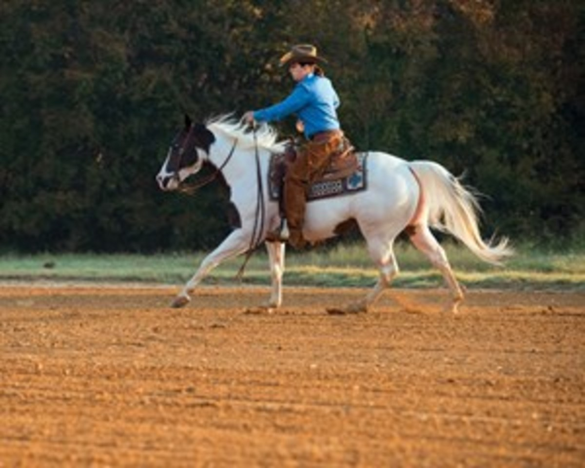 Though an arena competition might seem a far cry from your favorite trail, you might be surprised at how many ranch horse pleasure maneuvers your trail mount already knows.