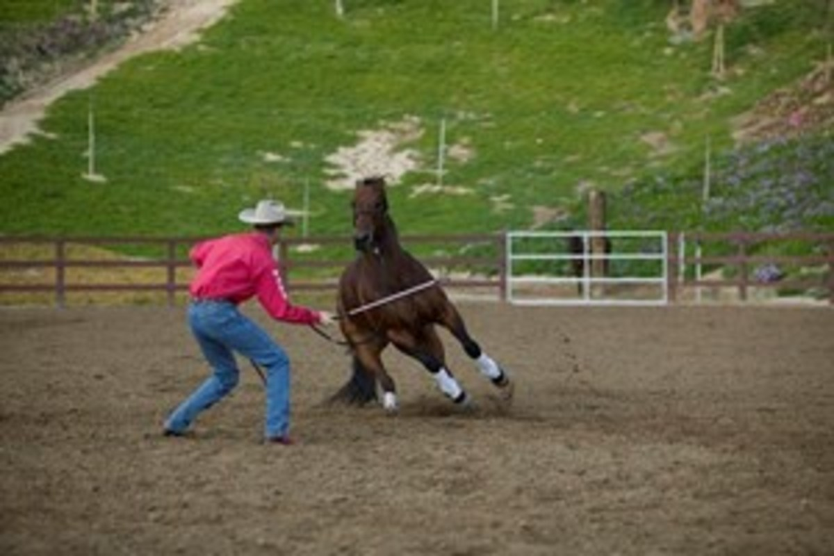 """When I work a horse on the ground I put a rope halter and 14-foot lead rope on him,"" says Clinton Anderson. ""I progress the horse through a series of exercises that are designed to get his feet moving forward, backward, left, and right."""
