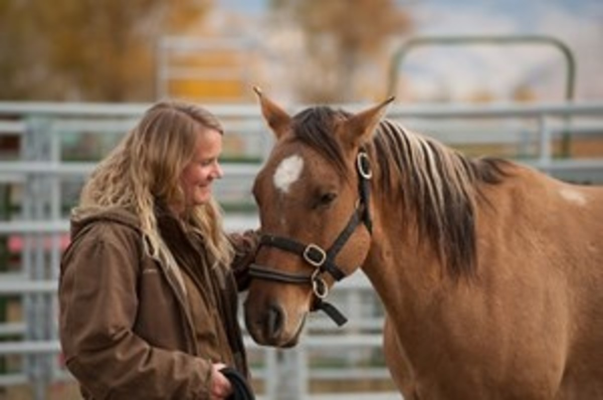 Credit: Photo courtesy of CLIXPHOTO  The amount of time the horse needs to bond with you will depend on the horse, says natural-horsemanship trainer Anna Twinney (shown).
