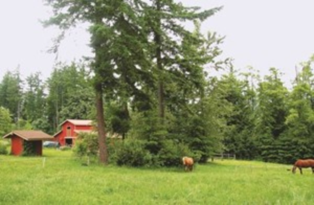 Native plants and animals can serve both utilitarian and delightful functions on horse  properties.