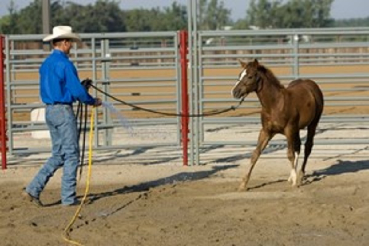 Follow your horse with the hose wherever he goes until he stands still and relaxes.