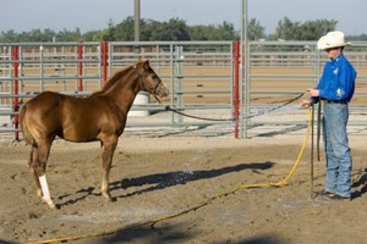 Start out by desensitizing the air space around your horse. Clinton Anderson usually starts by spraying the ground around the horse's back feet first.