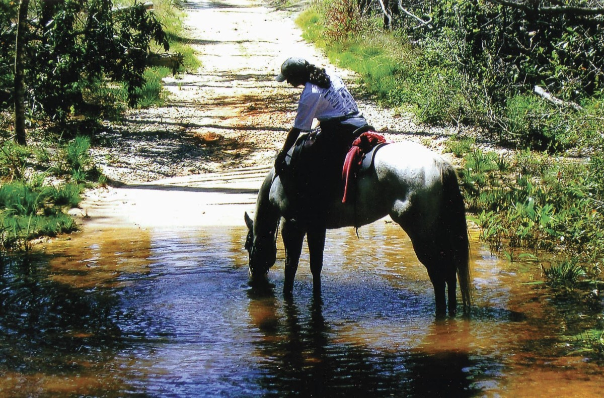 Coldwater Recreation Area is located north of Pensacola in the western part of the Florida Panhandle. Clear, shallow streams cross several of the trails.