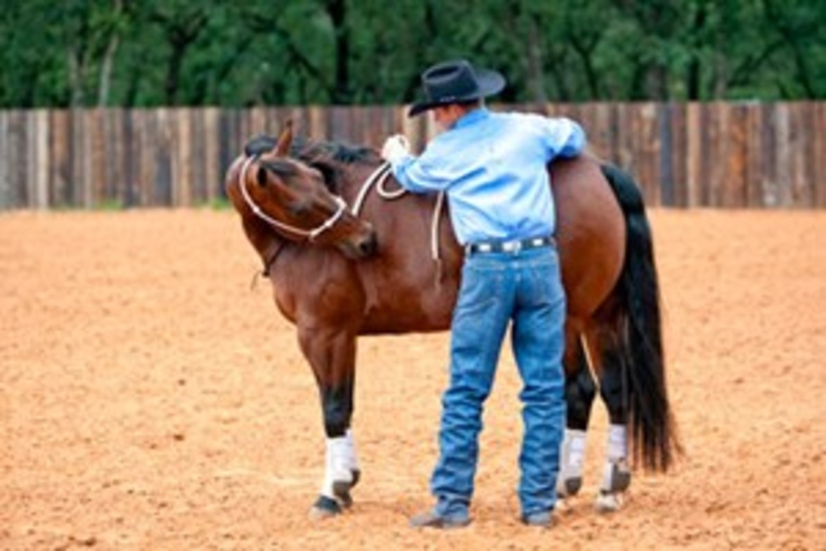 """Here, Anderson picks up the lead rope with his left and pulls it to his horse's withers. """"Glue your hand to where his withers meet his back,"""" he says."""