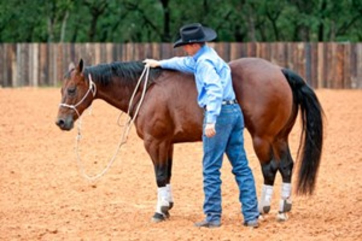 As soon as your horse softens, drop the lead rope with your left hand, then slide your right hand forward to his create a lot of lead-rope slack for a complete release.