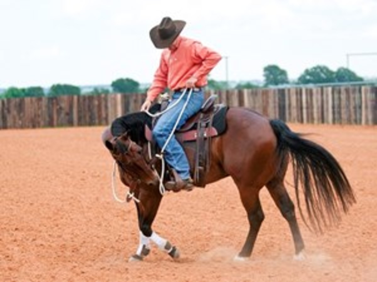 Step 2: Cue your horse to bend to the left using left-rein and left-leg pressure.