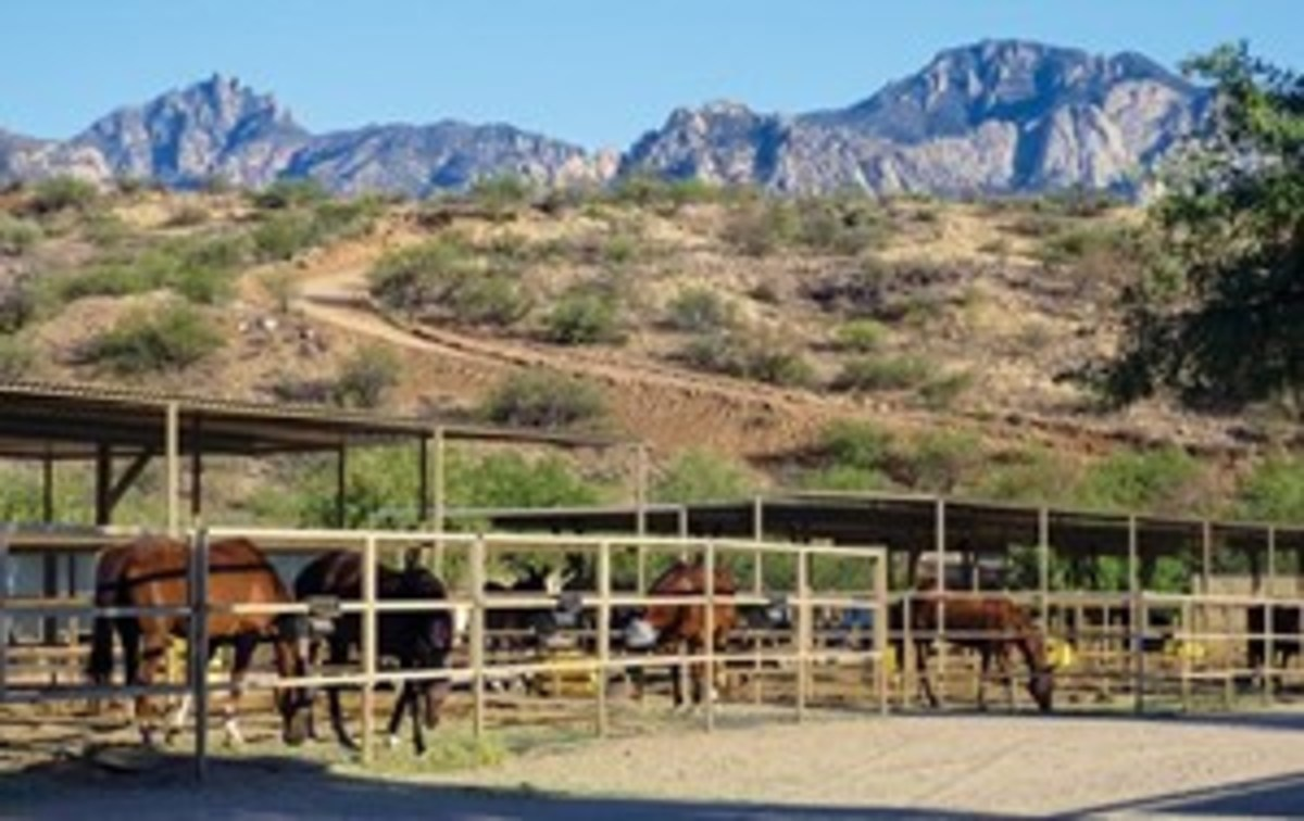 The town of Catalina, north of Tucson, attracts numerous snowbirds with horses. Shown is Spirit Dog Ranch, one of the town's boarding facilities.