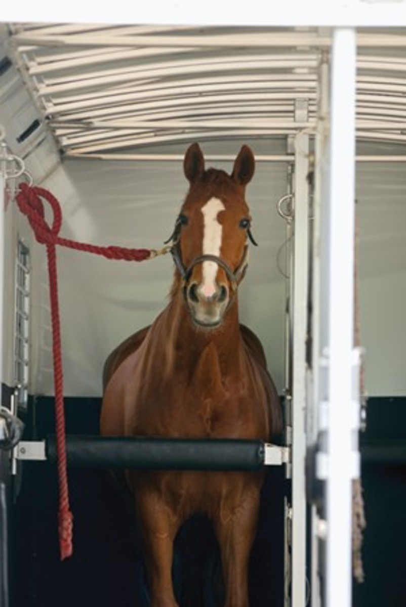 Credit: CLIXPHOTO.COM Find out what your horse goes  through when you haul him, and  learn how you can make your trailer more quiet and comfortable, with this expert guide. (On the road, be sure to tie your horse so he has enough room to drop his head and clear his respiratory passages.)