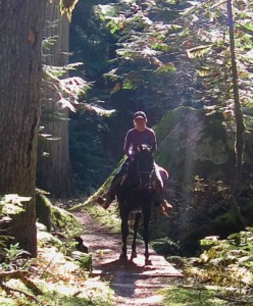 Lifelong horsewoman Rhonda Massingham Hart is back in the saddle after several falls created a fear of trail riding.   Photo Courtesy of Rhonda Massingham Hart