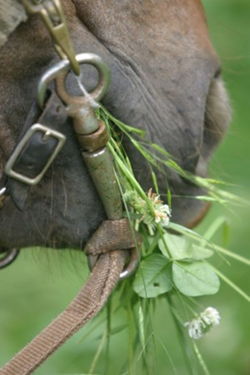 Credit: Heidi Melocco Your grass-grabber thinks of you as the subordinate herd member, because you give him first dibs on the tasty grass.