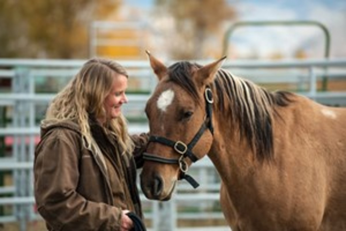 """Anna Twinney demonstrates """"Reaching Out,"""" a """"getting to know one another"""" exercise. This includes personality assessment, recognizing the horse's history, and what she calls """"gaining a contract."""""""
