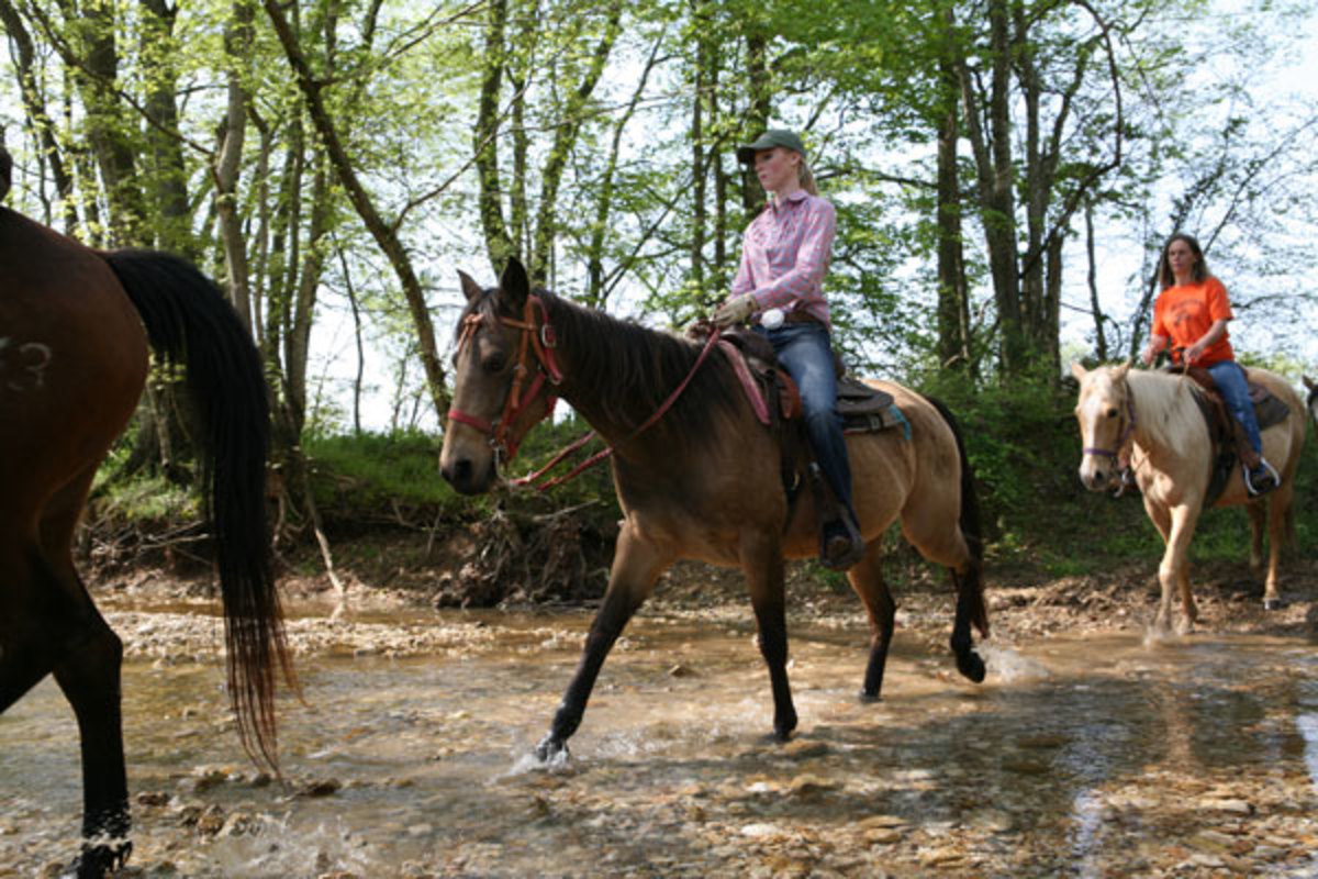 Darley Newman, Randall Mitchell, and riders from Equine Adventures at Wranglers Riding Stables at Land Between the Lakes National Recreation Area.   Photo By Chip Ward Photos