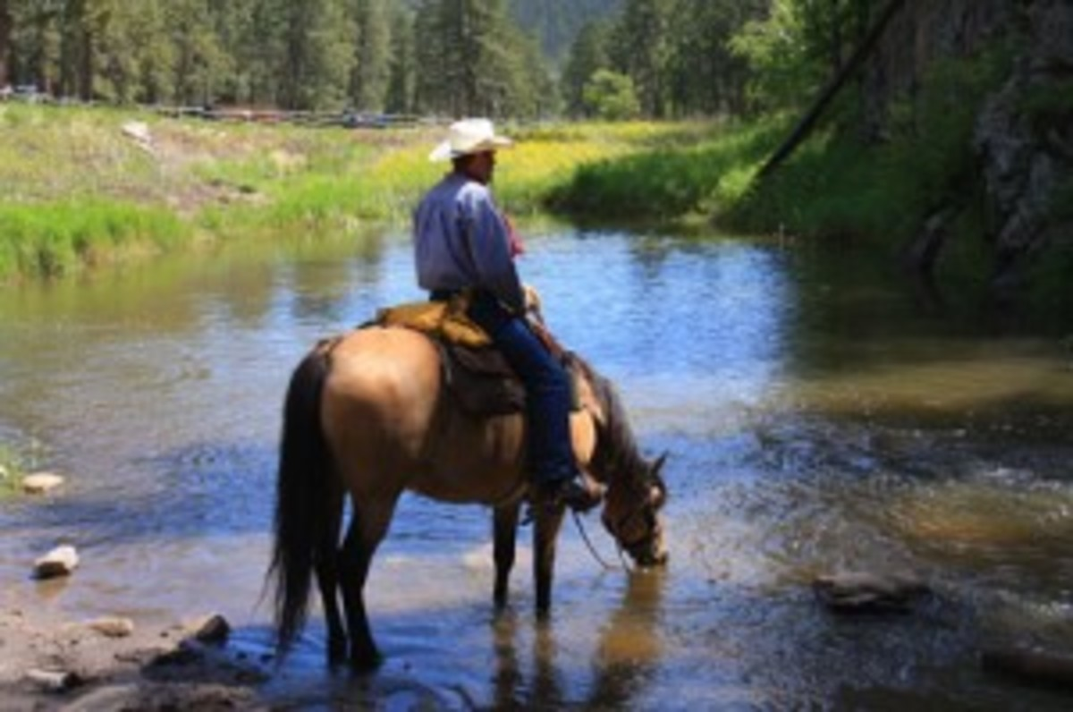 Credit: Photo by Kent and Charlene Krone Let your horse drink from water sources along the trail or near the camp to conserve the water you've hauled in.