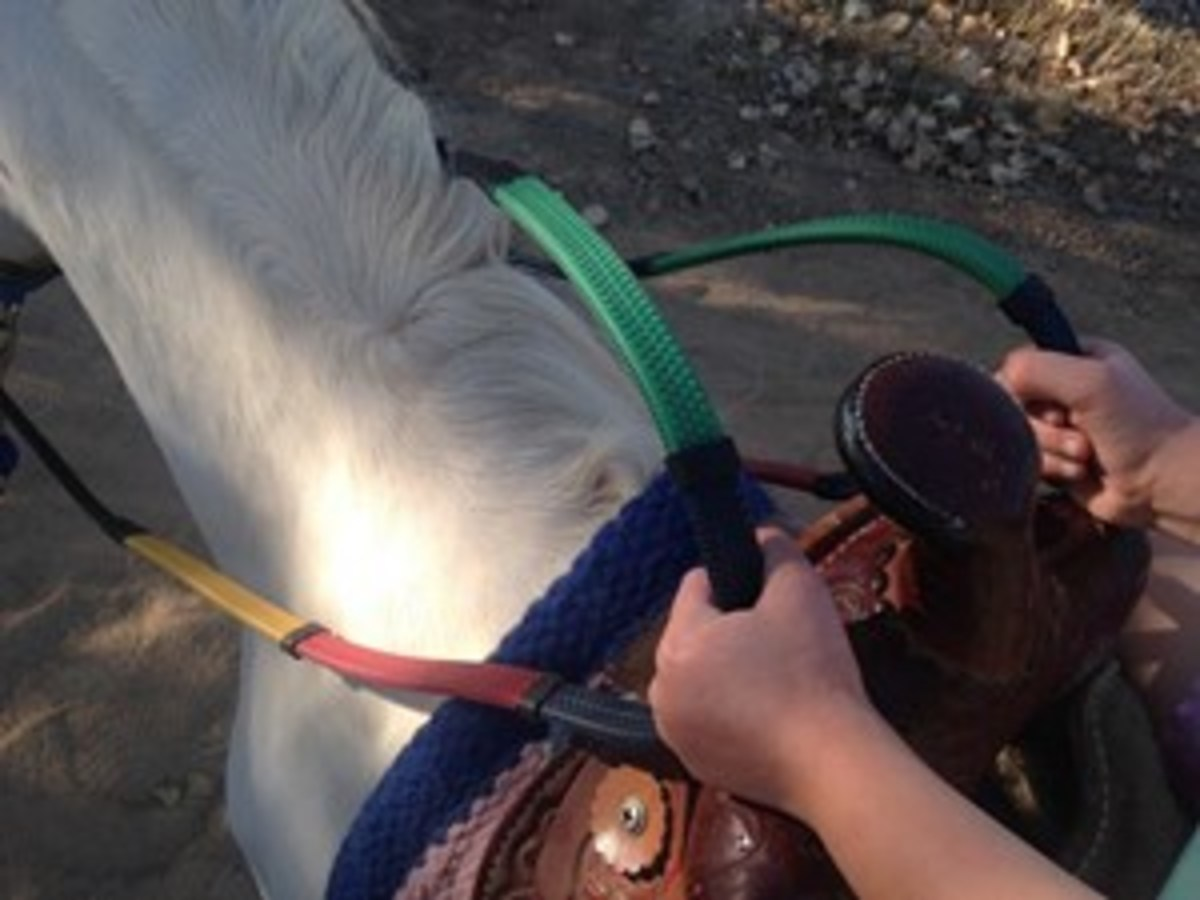 Credit: Heidi Melocco Consider rainbow training reins, which allow you to give clear directions and help the child to keep the reins even.