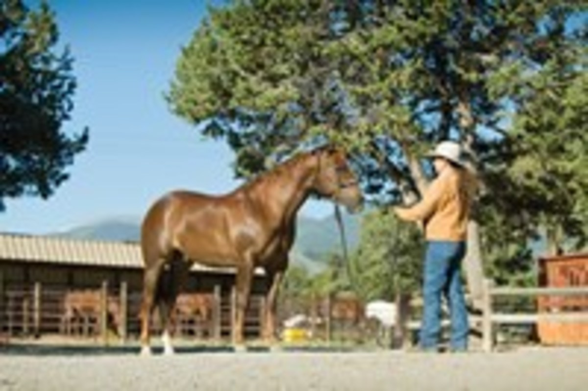 The standstill cue teaches your horse to stay put when you turn and face him.