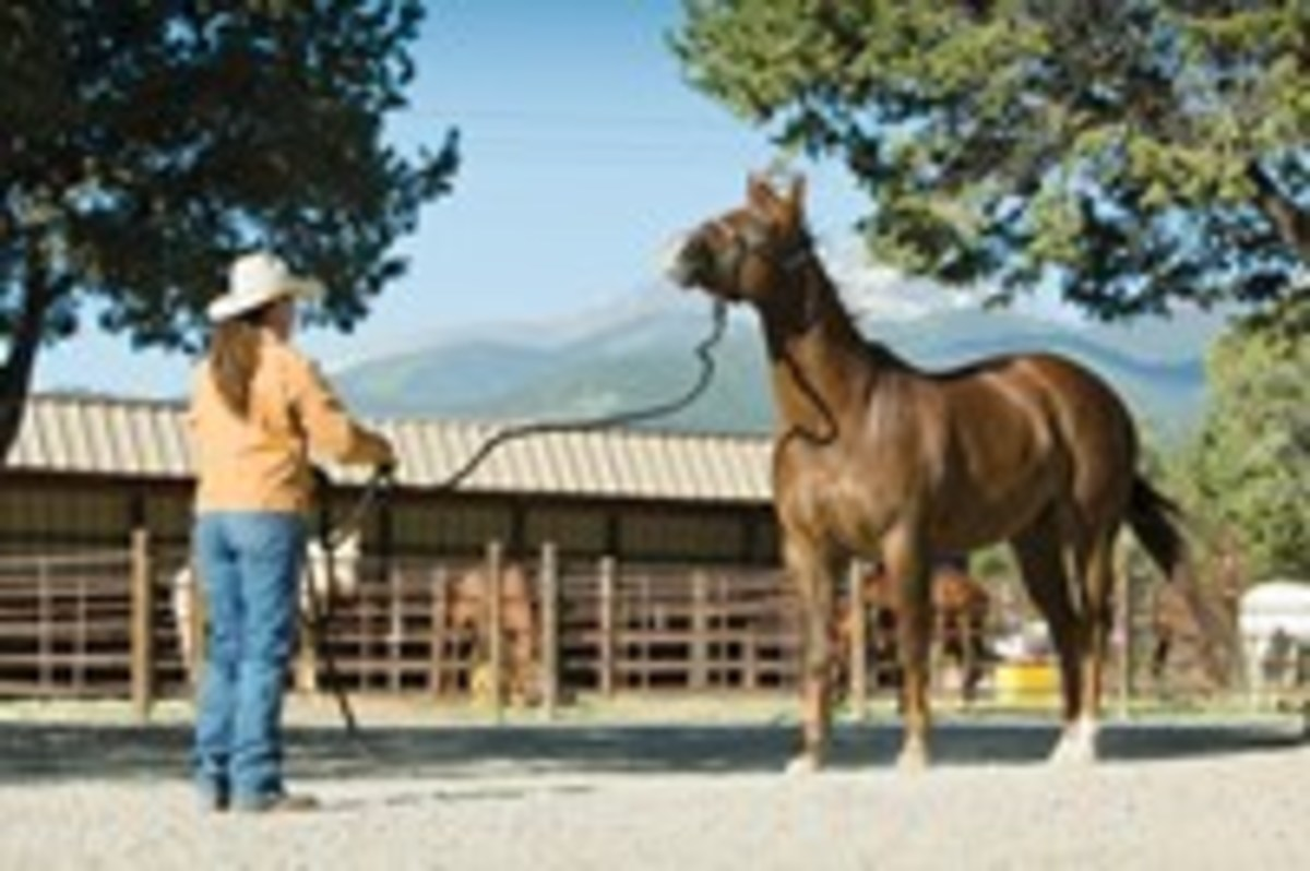 If your horse takes a step as you teach the standstill, correct him by wiggling the lead rope.