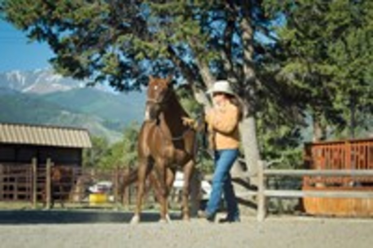 Turn your horse away from you so he learns not to enter your space without an invitation.