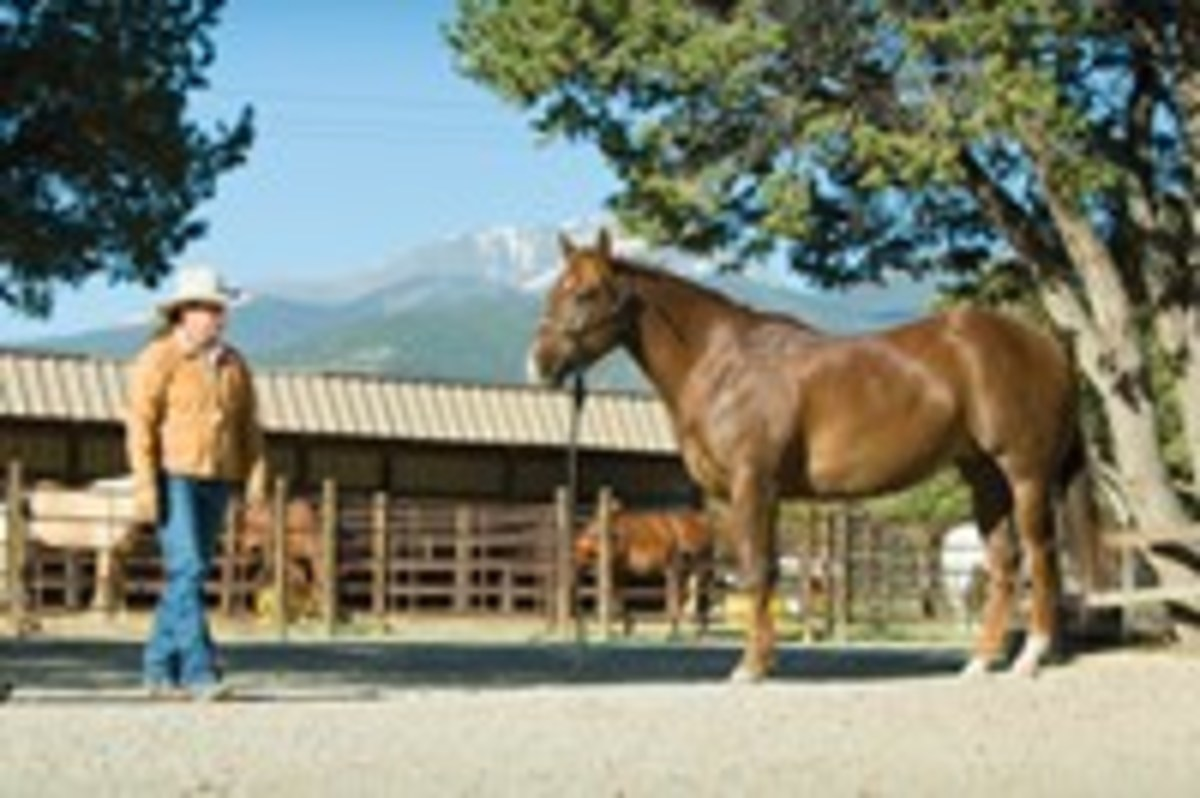 When your horse learns to stand still with the lead rope on the ground, try taking a few steps away to test his new ground-tie skill. If he moves a step, pick up the lead and correct him.