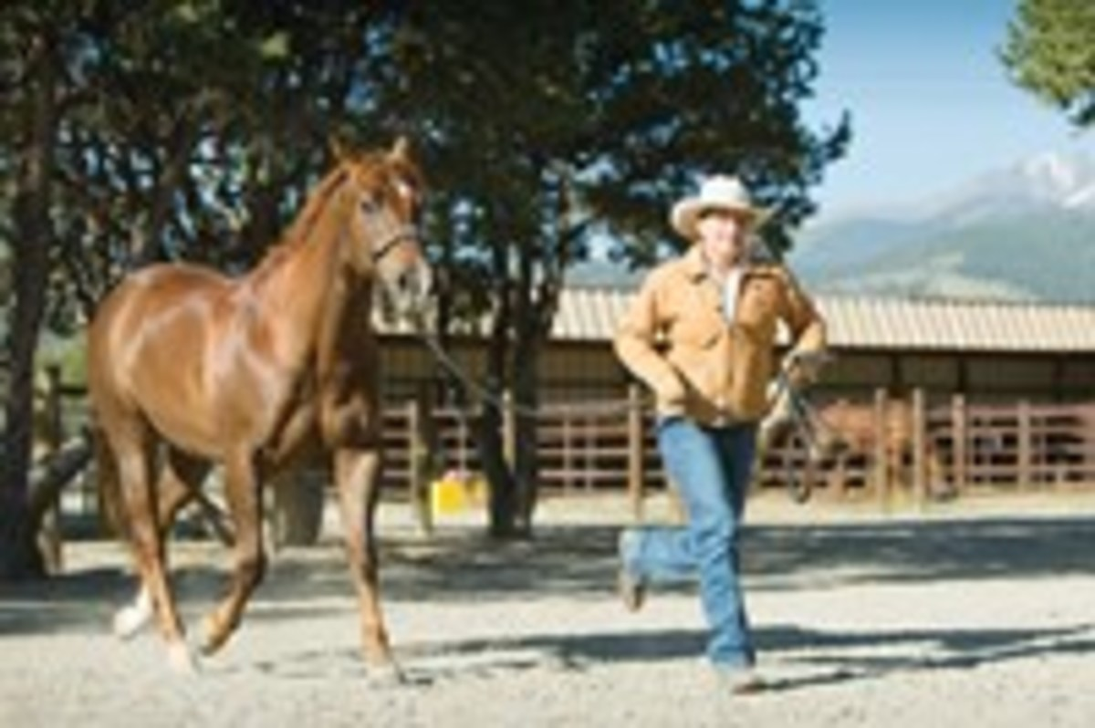Your horse should willingly trot beside you with slack in the line and while moving at your pace.