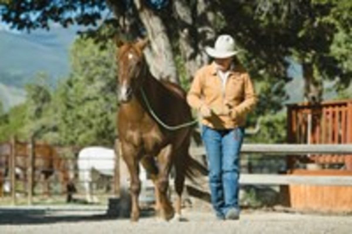 If your horse is responding well to your body cues, switch to a neck rope. Cue him to walk on by bending your upper body forward and giving him a voice command, rather than pulling on the rope.