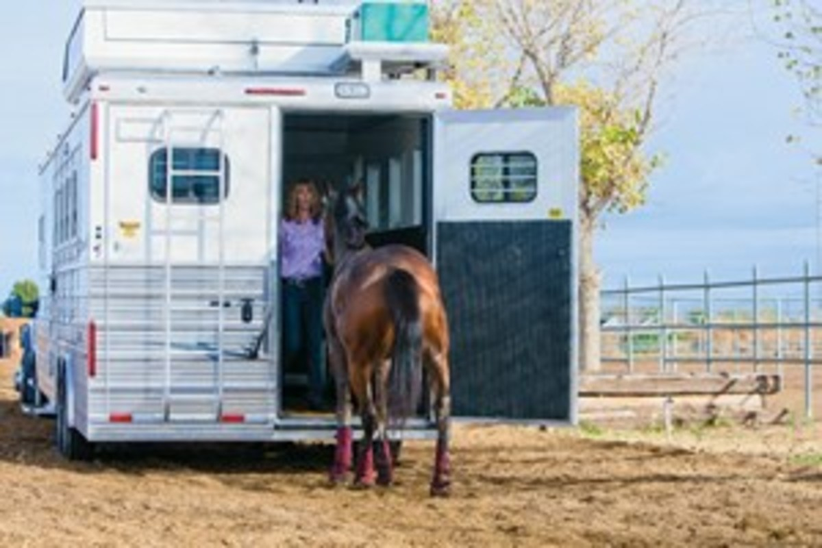 Stay out of your horse's way as you load him. Don't stand in front of him. A well-trained horse will wait until you walk forward and get out of the way to load up. However, a horse that doesn't want to load  will take your placement as a reason not to move forward and to think of an alternate destination.