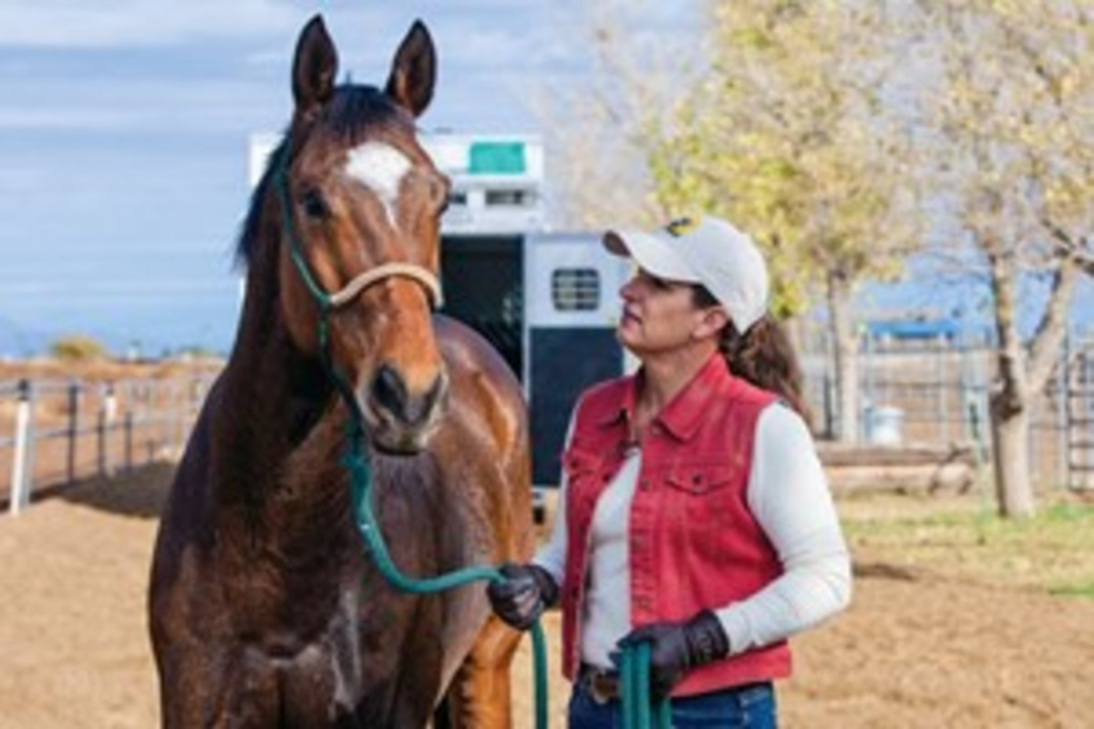 Before you start each trailer-loading session, outfit your horse in a rope training halter for control. Switch to a gentler, flat halter for trailering.