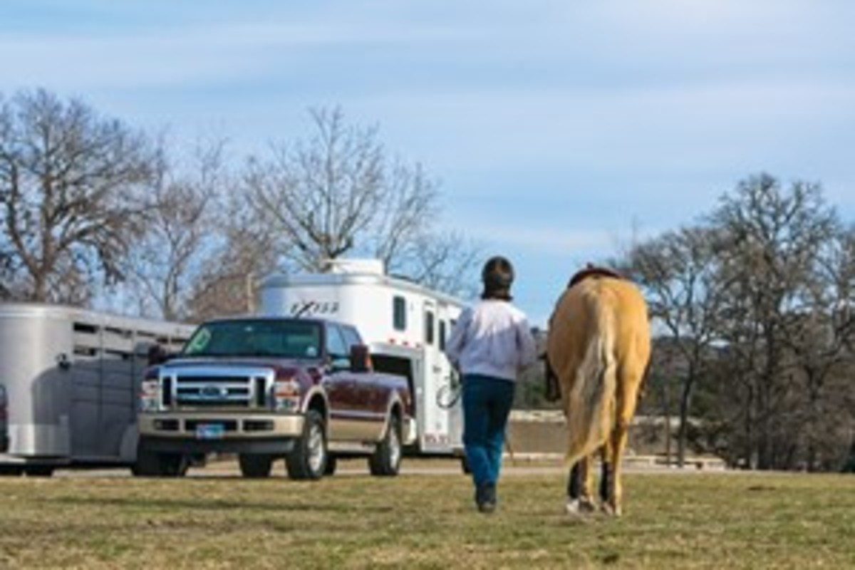 When you approach the trailer, your  horse needs to know that you mean business. Point his nose straight ahead. Don't allow him to look from side to side.