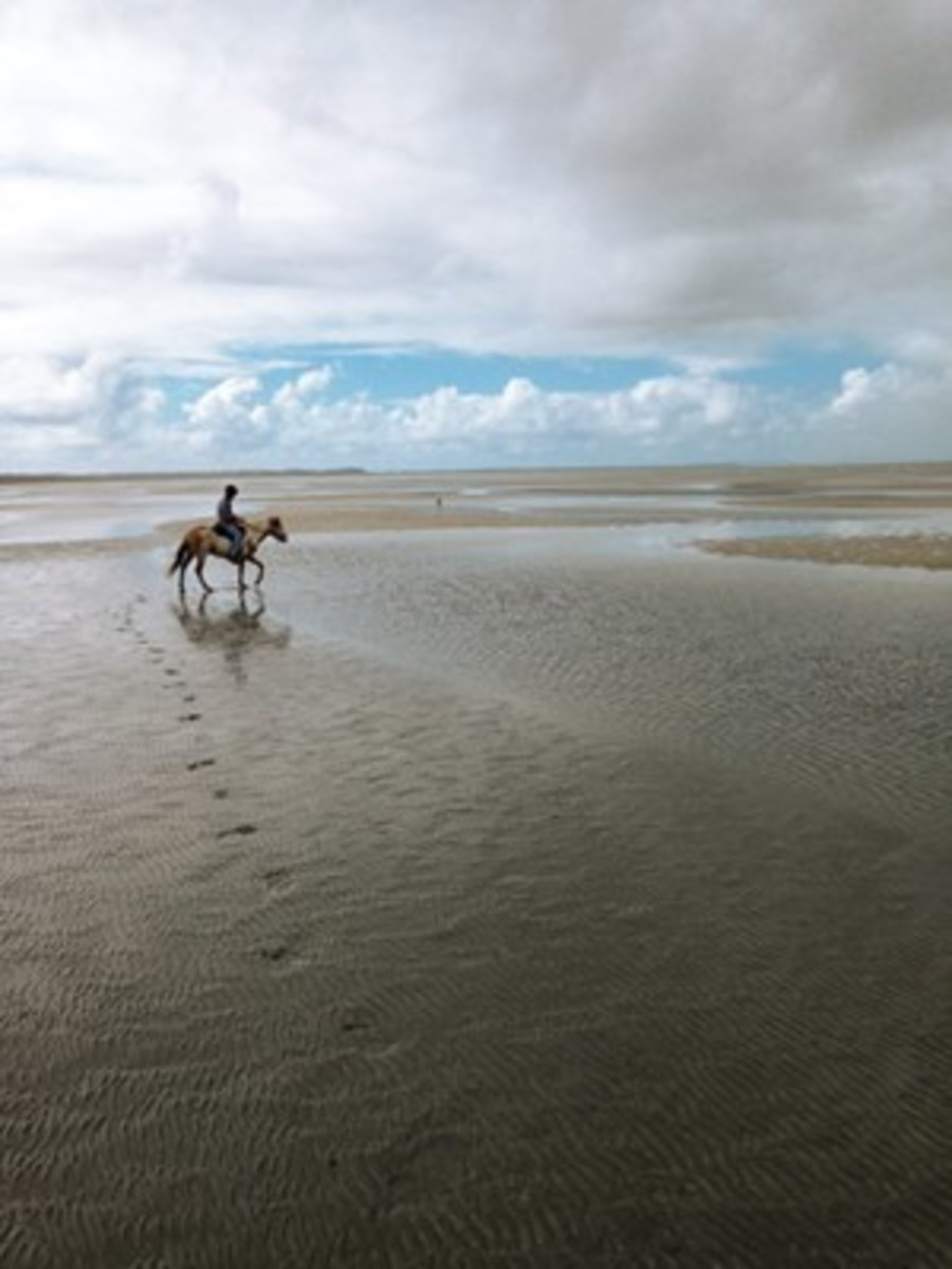 Credit: Audrey Pavia  After riding in Brisbane, Audrey Pavia headed to Beachmere, onMoreton Bay, located on Australia's Sunshine Coast. Shown is Pavia'sAustralian friend, Warrick, riding his Spanish Mustang, Caz.