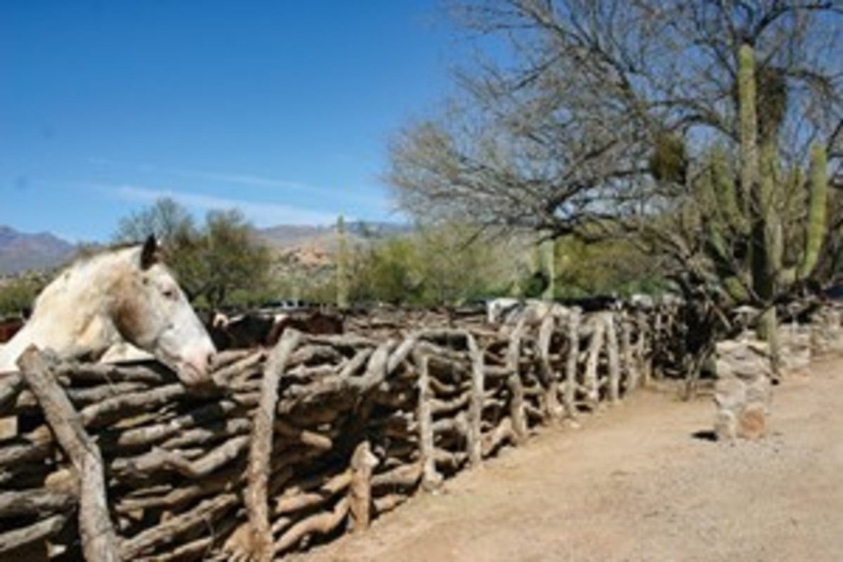"Rugged logs form the corrals at Tanque Verde Guest Ranch. ""With 150-plus horses in the riding string, TVGR has a horse to match every guest's ability and comfort level,"" says Cynthia McFarland. ""Most ranch mounts are stock-horse types, with a number of draft-horse crosses, as well."""